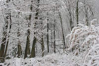 Photograph - Winter Wonderland by Polly Castor