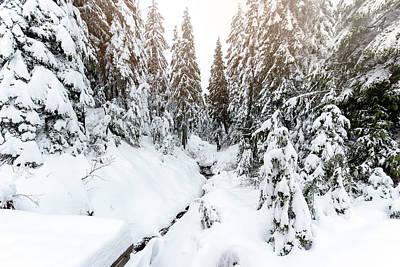 Photograph - Winter Wonderland by Sabine Edrissi