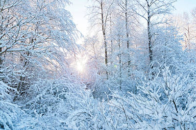 Photograph - Winter Wonderland by Sandra Sigfusson