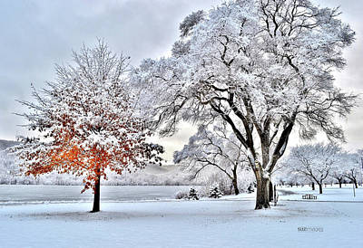Photograph - Winter Wonderland by Susie Loechler