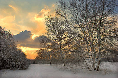 Photograph - Winter Wonderland by Terence Davis