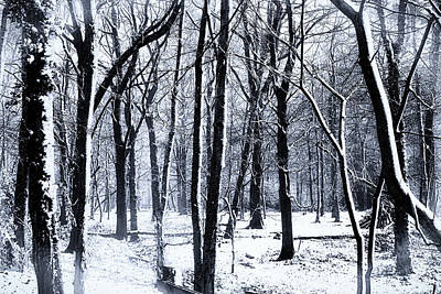 Winter Woodland Art Print by Martin Newman