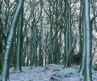 Photograph - Winter Woodland by Roger Lever