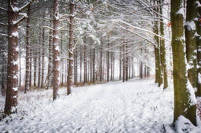 Winter Woods And Path -  Retzer Nature Center  Art Print