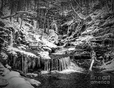 Photograph - Winter Woods At Ricketts Glen by Nick Zelinsky