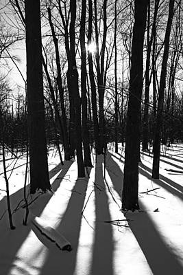 Photograph - Winter Woods Black And White by Debbie Oppermann