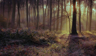 Outerspace Patenets Rights Managed Images - Winter Woods Royalty-Free Image by Ceri Jones