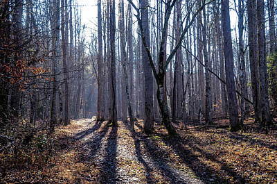 Photograph - Winter Woods by CK Brown