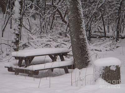 Photograph - Winter Woods by Deborah Finley