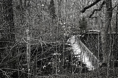 Photograph - Winter Woods by George Taylor