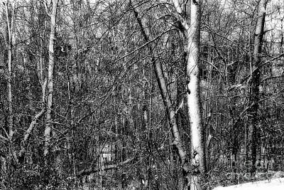 Photograph - Winter Woods by Karen Adams