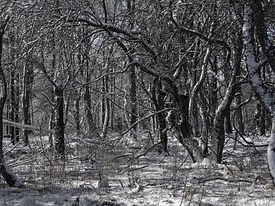 Photograph - Winter Woods by Lois Lepisto