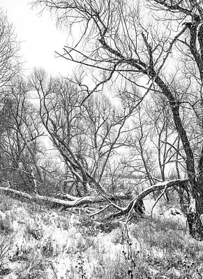 Photograph - Winter Woods On A Stormy Day 2 Bw by Steve Harrington