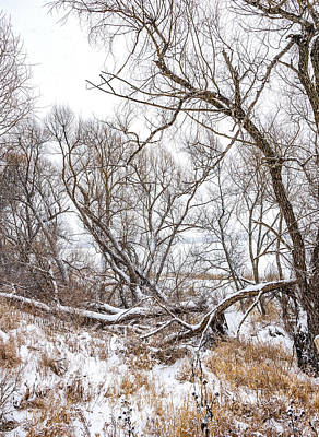 Photograph - Winter Woods On A Stormy Day 2 by Steve Harrington