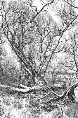 Photograph - Winter Woods On A Stormy Day Bw by Steve Harrington