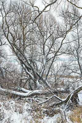 Photograph - Winter Woods On A Stormy Day by Steve Harrington
