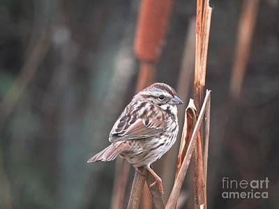 Photograph - Winter Wren by Marcia Lee Jones