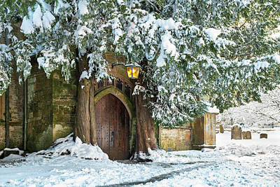 Photograph - Winter Yews In Stow On The Wold by Tim Gainey