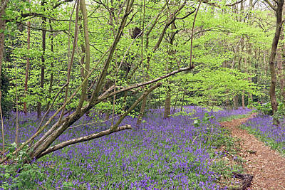 Photograph - Winterbourne Bluebells by Tony Murtagh