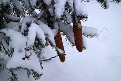 Photograph - Wintergreen by Scott Kingery