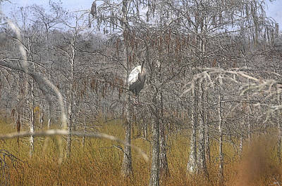 Cypress Swamp Digital Art - Wintering by David Lee Thompson