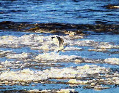 Photograph - Wintering Gull by John Freidenberg
