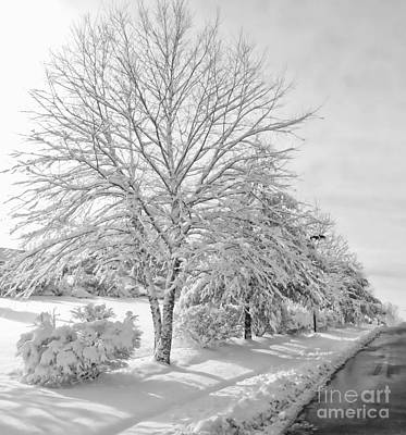 Photograph - Winterland by Marcia Lee Jones