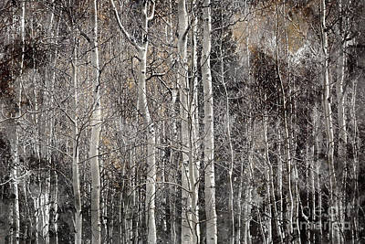 Photograph - Winters Approach by Doug Sturgess