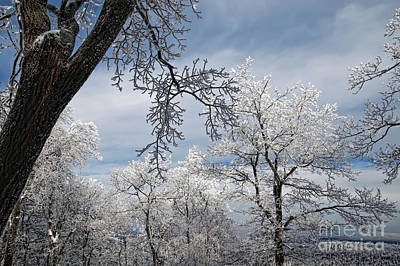 Photograph - Winter's Arrival by Lois Bryan