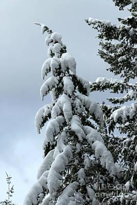 Photograph - Winter's Burden by Leone Lund