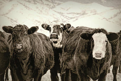 Photograph - Vintage Winter's Cattle Sepia by Jennie Marie Schell