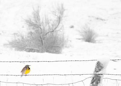 Meadowlark Wall Art - Photograph - Winters Color by Al Swasey