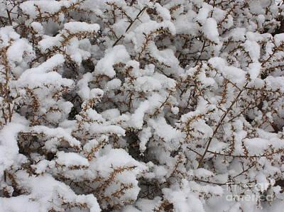 Winter's Contrast Print by Carol Groenen
