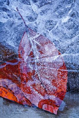 By Jackie Photograph - Winters Entrapment by Jackie Sajewski