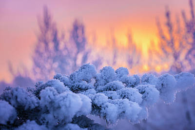 Photograph - Winters Frost by Scott Slone