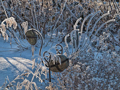 Photograph - Winter's Garden by Alana Thrower