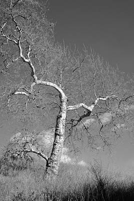 Photograph - Winter's Ghost by Parrish Todd