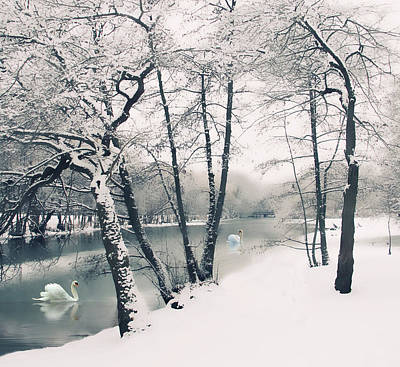 Photograph - Winter's Grace by Jessica Jenney
