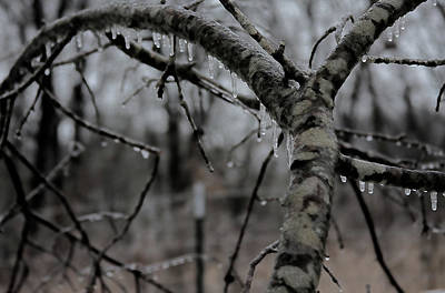 Photograph - Winter's Grip by Gwen Vann-Horn