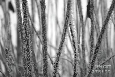 Photograph - Winter's Lace In Black And White by Carol Groenen
