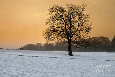 Oak Trees Photograph - Winters Morning by Nichola Denny