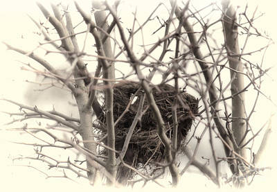 Photograph - Winter's Nest by Erica Hanel