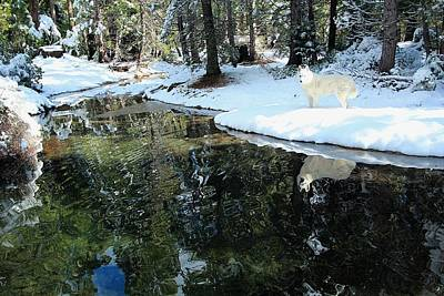 Photograph - Winter's Path To Reflection by Sean Sarsfield