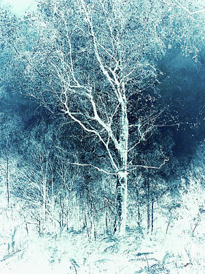 Wintry Mixed Media - Winter's Peace by Callan Percy