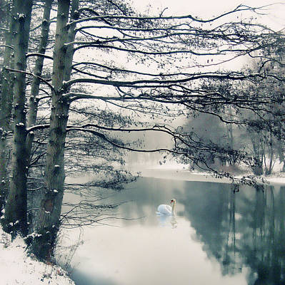 Photograph - Winter's Reach II by Jessica Jenney