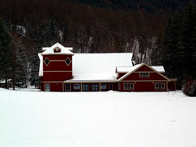 Photograph - Winters Red by Nicki Bennett