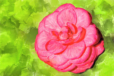 Mixed Media - Winter's Rose - The Camellia by Mark Tisdale