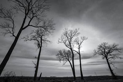 Photograph - Winter's Skeletons by Penny Meyers