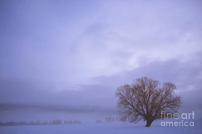 Photograph - Winters Solitude by Idaho Scenic Images Linda Lantzy