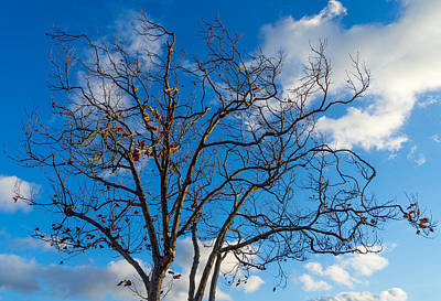 Photograph - Winter's Tree by Derek Dean